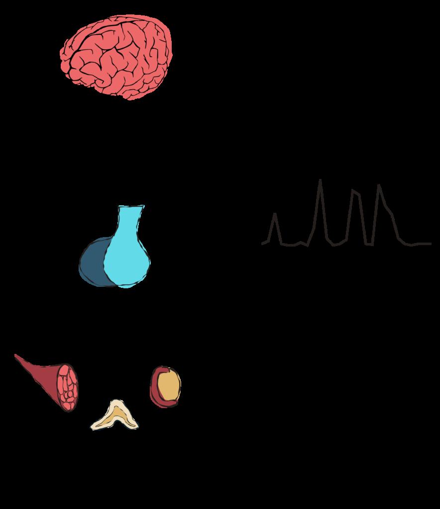 Generic schematic of endocrine axes
